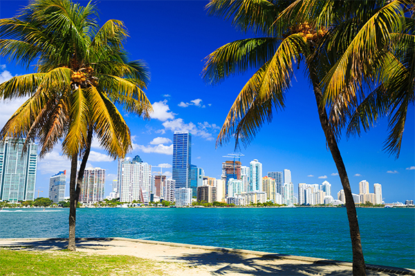 Miami skyline with palm trees